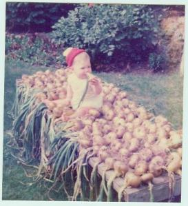 russell on onion crop aug 1975.bmp
